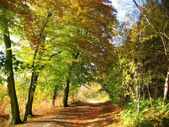 more_autumn_colour_delamere_forest_-_geograph-org-uk_-_73480